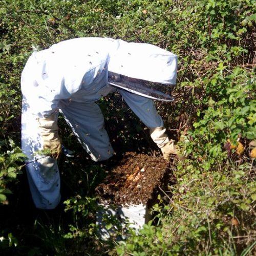 Sébastien visite ses ruches