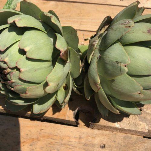 Gros artichauts à bouillir - Ferme de Chez Horry