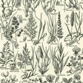Catégories plantes