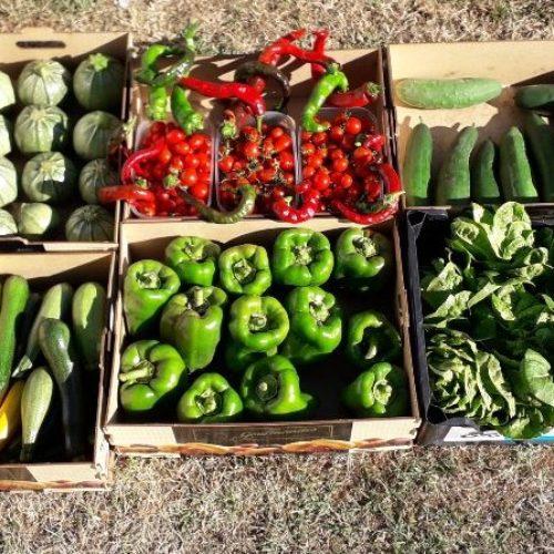 Légumes cueillis du matin Del et le Pot à Jé