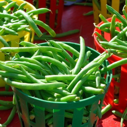 Haricots verts bio Domaine de la Poterie