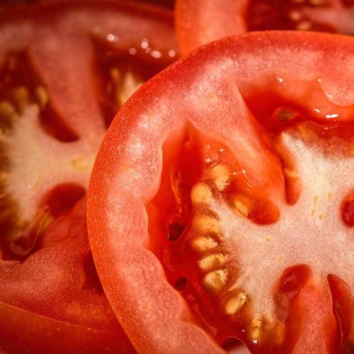Tomates rondes bio Domaine de la Poterie