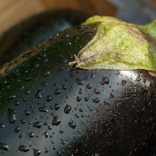 Aubergines bio Domaine de la Poterie