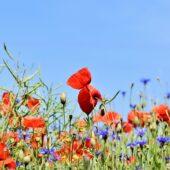 Visites pépinière et jardin