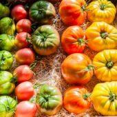 Tomates variétés anciennes bio mélange - La Ferme de la Brunette