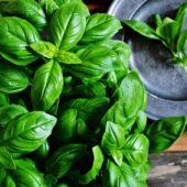 Plant de basilic bio - La ferme de la Brunette