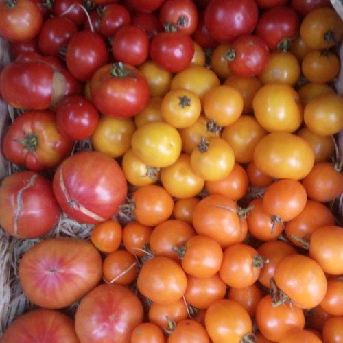 Tomates variétés anciennes et peu connues bio - Ferme de la Brunette