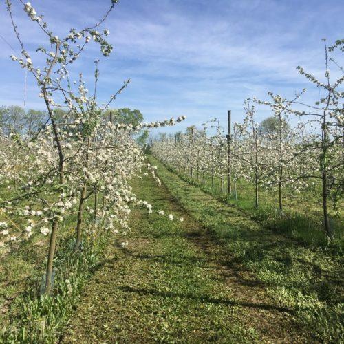 Didier Marilleau production de pommes bio à Sonnac