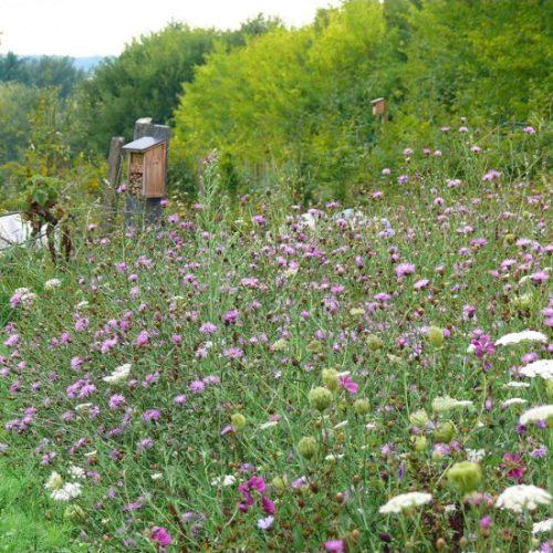 Graines de fleurs sauvages - Les Graines dans le Vent