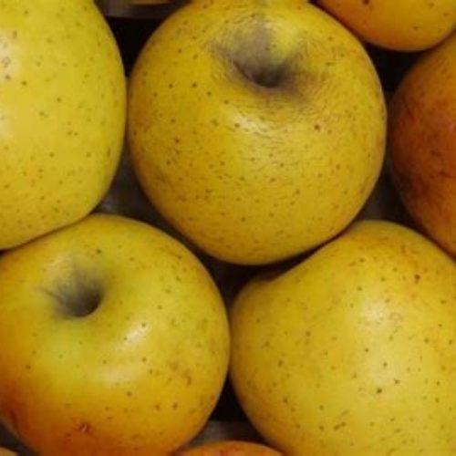 Pommes Goldrush Bio - Didier Marilleau