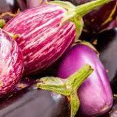 Plant bio d'aubergine - Terre d'Ô