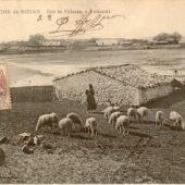 Viande de mouton - Talmont sur Gironde