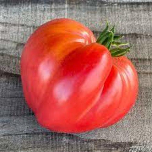 Tomates coeur de boeuf bio - ESAT Montandon