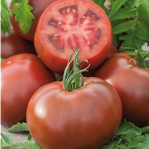 Tomates Kakao bio - ESAT Montandon
