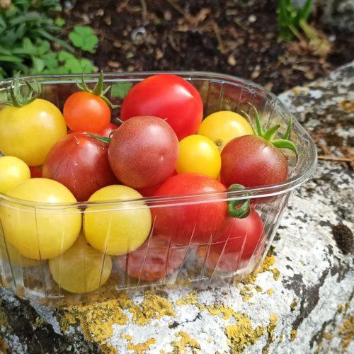 Tomates cocktail bio - Ferme de la Brunette
